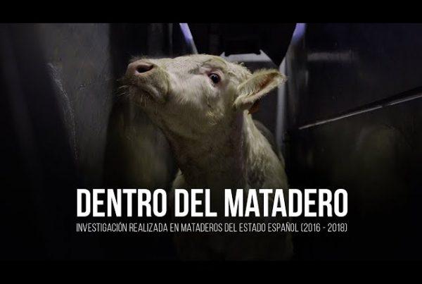 dentro_del_matadero