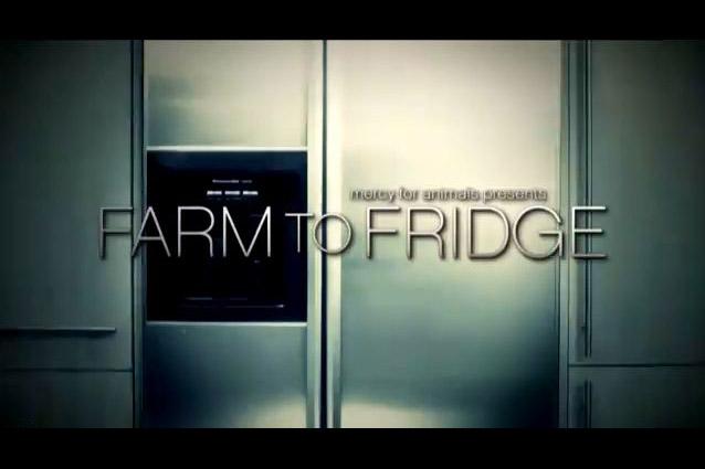 from_farm_to_fridge
