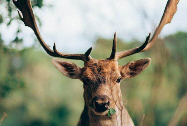 santuari_wildforest